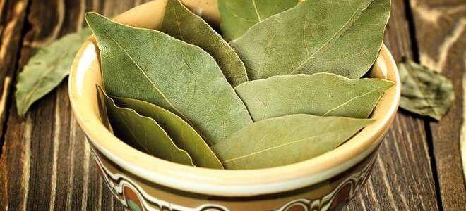 Лавровый лист: как хранить сухую и свежую специю в домашних условиях