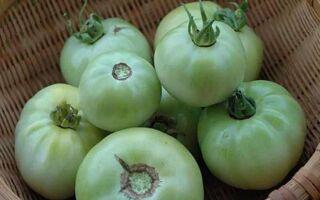 Как правильно хранить зеленые помидоры, чтобы они покраснели и сохранились до Нового года