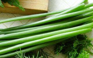 Как сохранить и заготовить на зиму зеленый лук: 5 простых способов