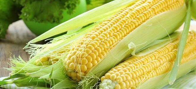 Как правильно хранить кукурузу – советы, которые помогут насладиться полезным злаком зимой