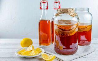 Чайный гриб (Комбуча) – напиток здоровья? Как вырастить и сохранить чайный гриб?