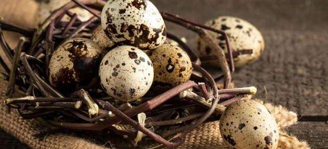 Срок годности и условия хранения перепелиных яиц: мифы и реальность
