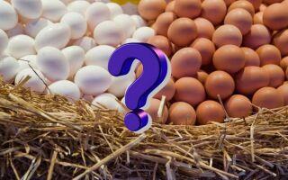 Почему не стоит платить больше за коричневые яйца