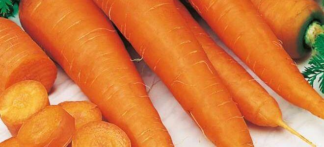 Как правильно хранить морковь в погребе и квартире: подробное руководство