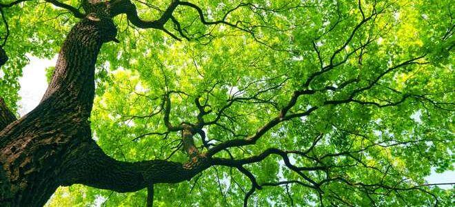 7 самых полезных дикорастущих деревьев