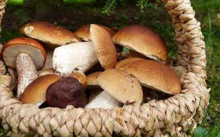 Сохраняем грибы на зиму быстро и без хлопот