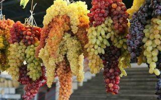 Всё о сохранении винограда на зиму.