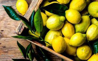 Как сохранить лимоны дома: несколько простых правил