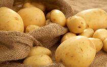 Как сохранить картофель до нового урожая: от выбора сорта до закладки в хранилище