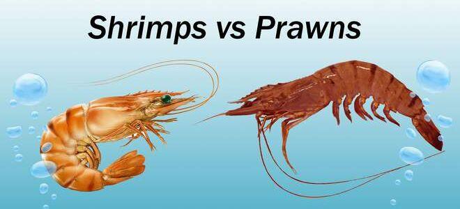 Креветки VS креветки, в чем разница между Shrimps и Prawns?