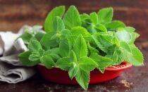 Как заготавливать и хранить мяту в кулинарных и лечебных целях