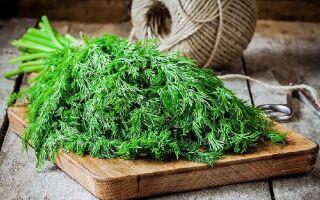 Свежий укроп круглый год: как заготовить и сохранить витаминную зелень