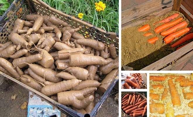 хранение моркови