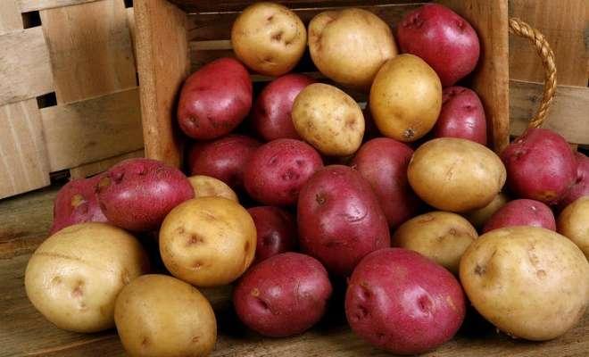 красный и белый картофель