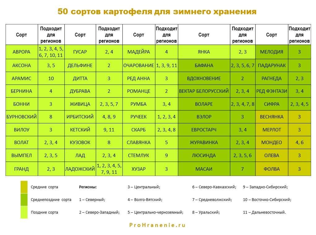 сорта картофеля для зимнего хранения (таблица)