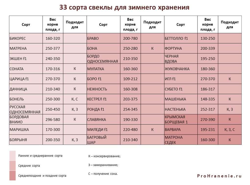 сорта свеклы для хранения зимой (таблица)