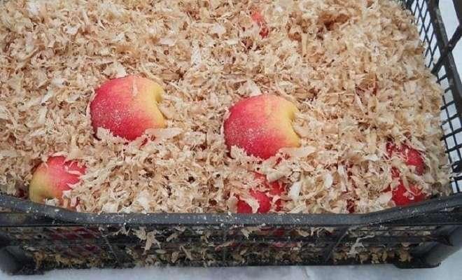 яблоки в опилках