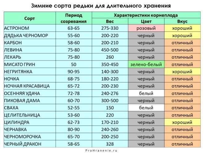 сорта редьки (таблица)